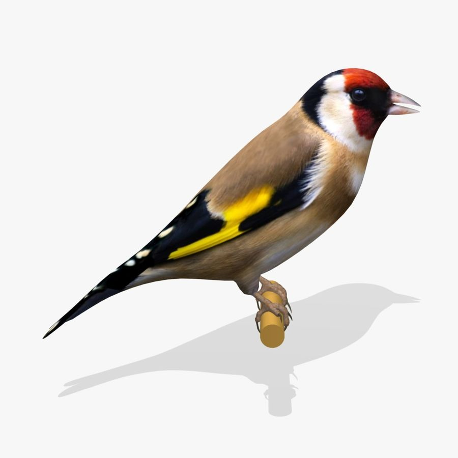 AB Goldfinch SA royalty-free 3d model - Preview no. 1