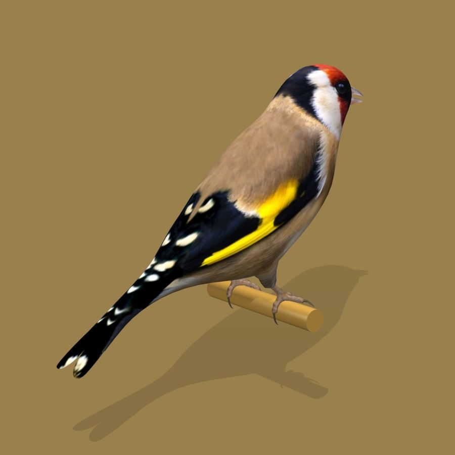 AB Goldfinch SA royalty-free 3d model - Preview no. 2