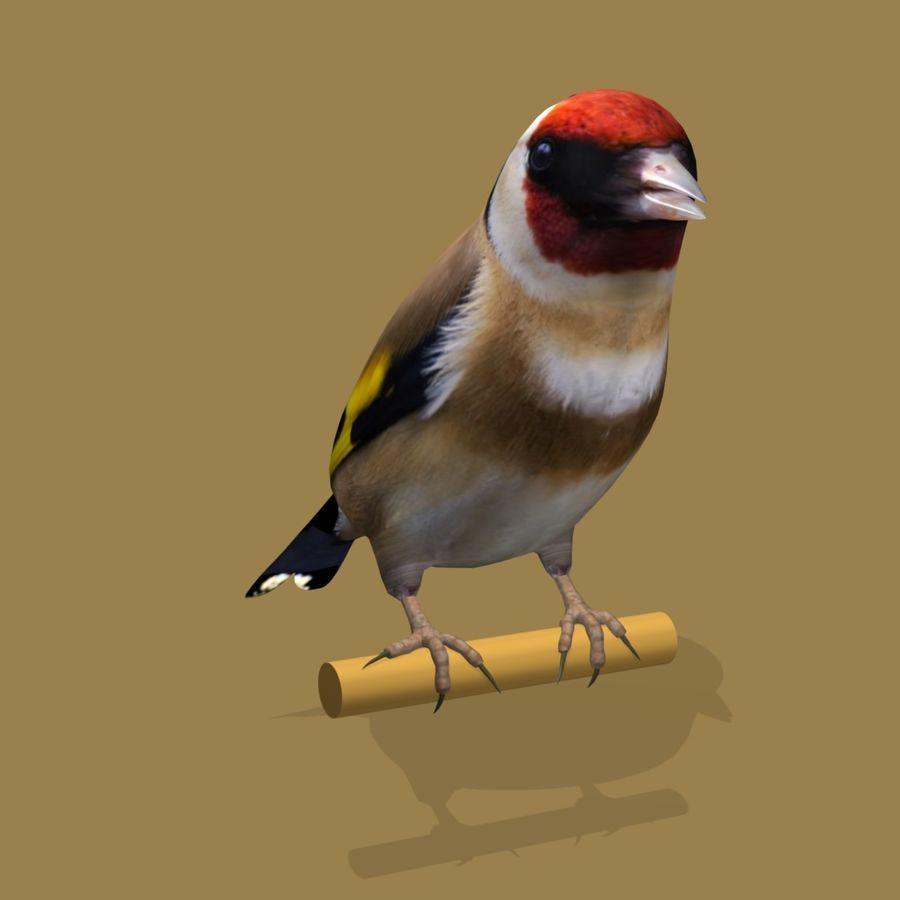AB Goldfinch SA royalty-free 3d model - Preview no. 4