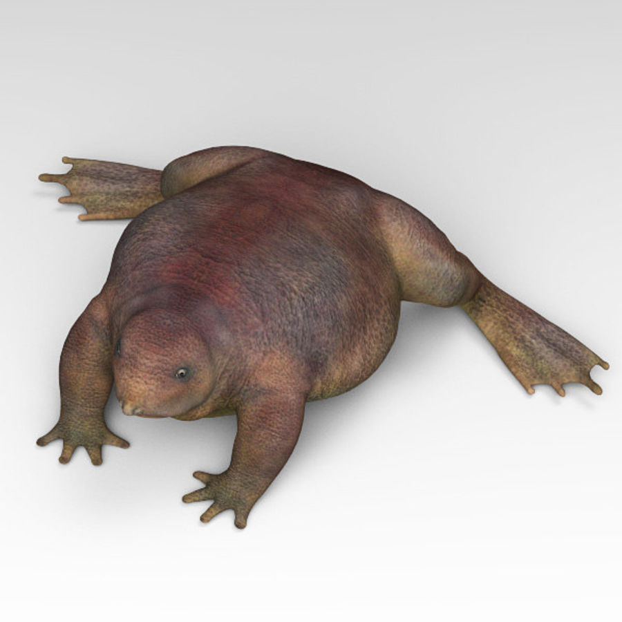 Frog Purple royalty-free 3d model - Preview no. 3