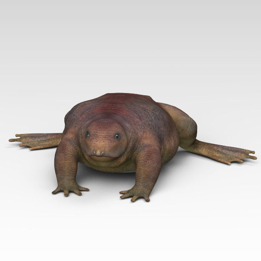 Frog Purple royalty-free 3d model - Preview no. 6