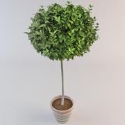 Planta en maceta 2 modelo 3d