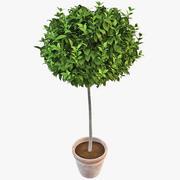 Potplant 2 3d model