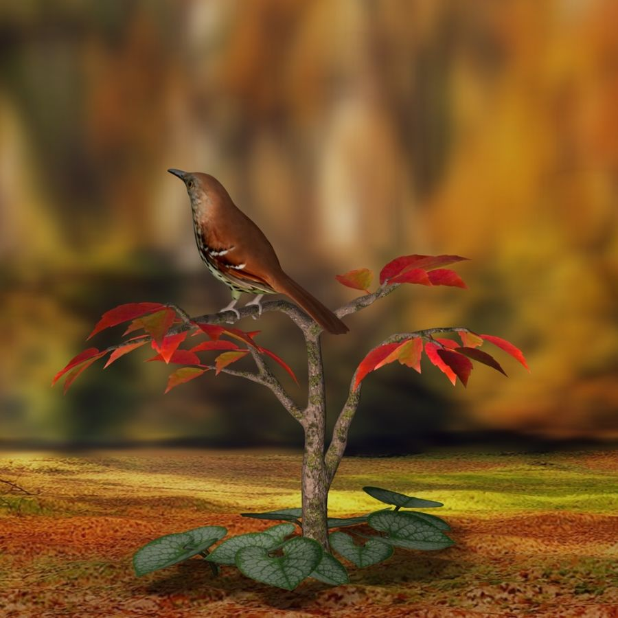 AB Brown Thrasher royalty-free 3d model - Preview no. 6