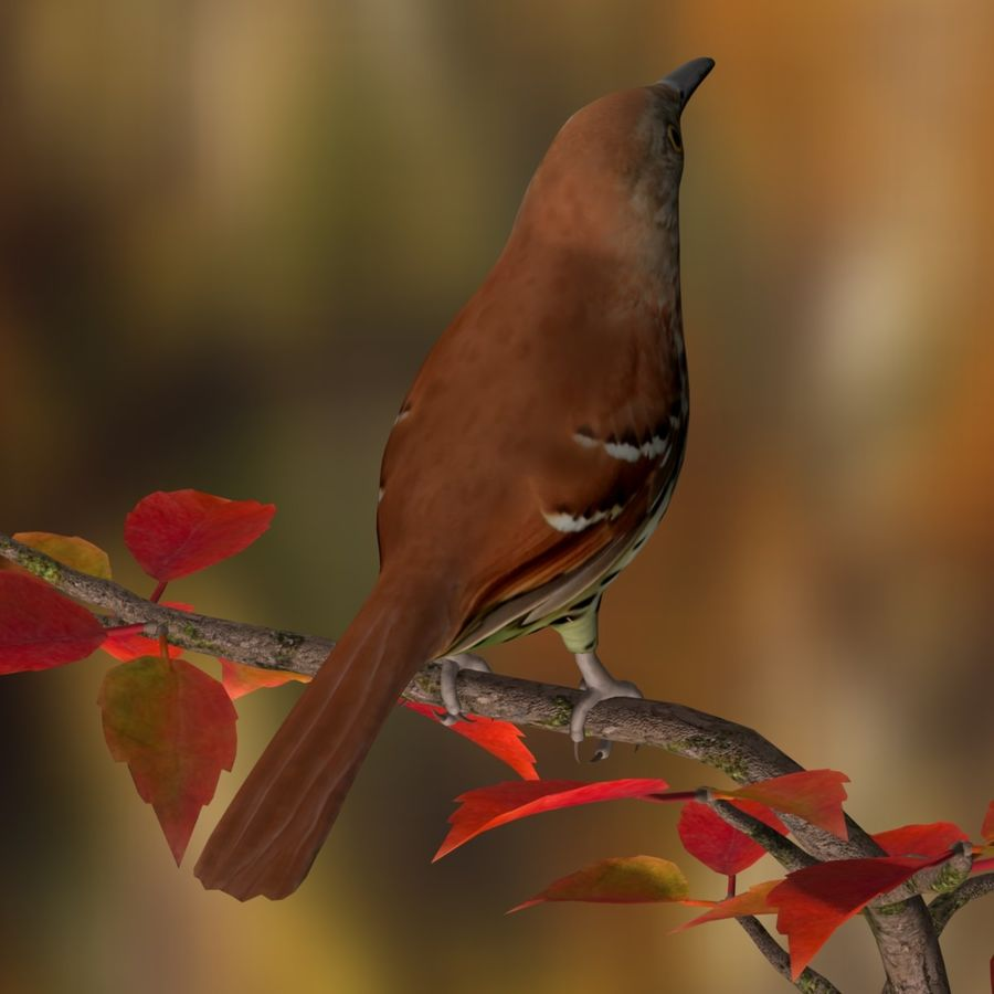AB Brown Thrasher royalty-free 3d model - Preview no. 3