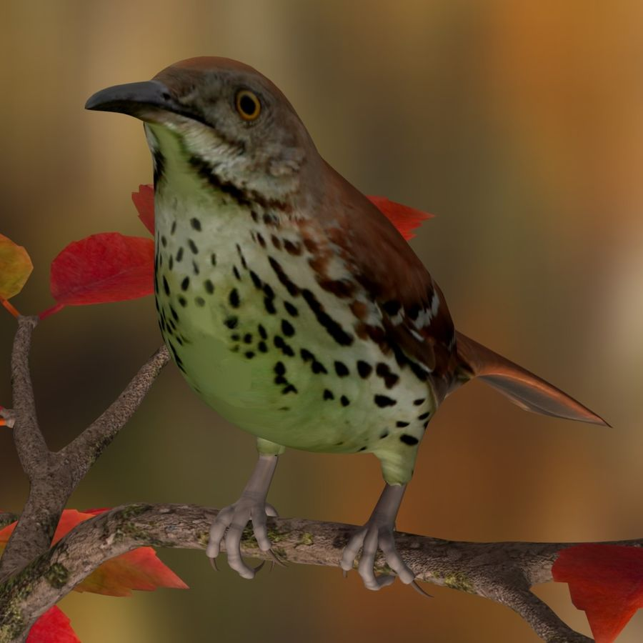 AB Brown Thrasher royalty-free 3d model - Preview no. 4