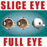 oog 3d model