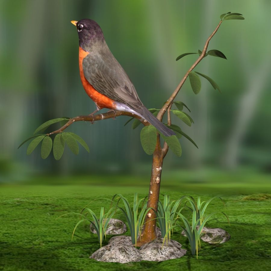 AB American Robin royalty-free 3d model - Preview no. 6