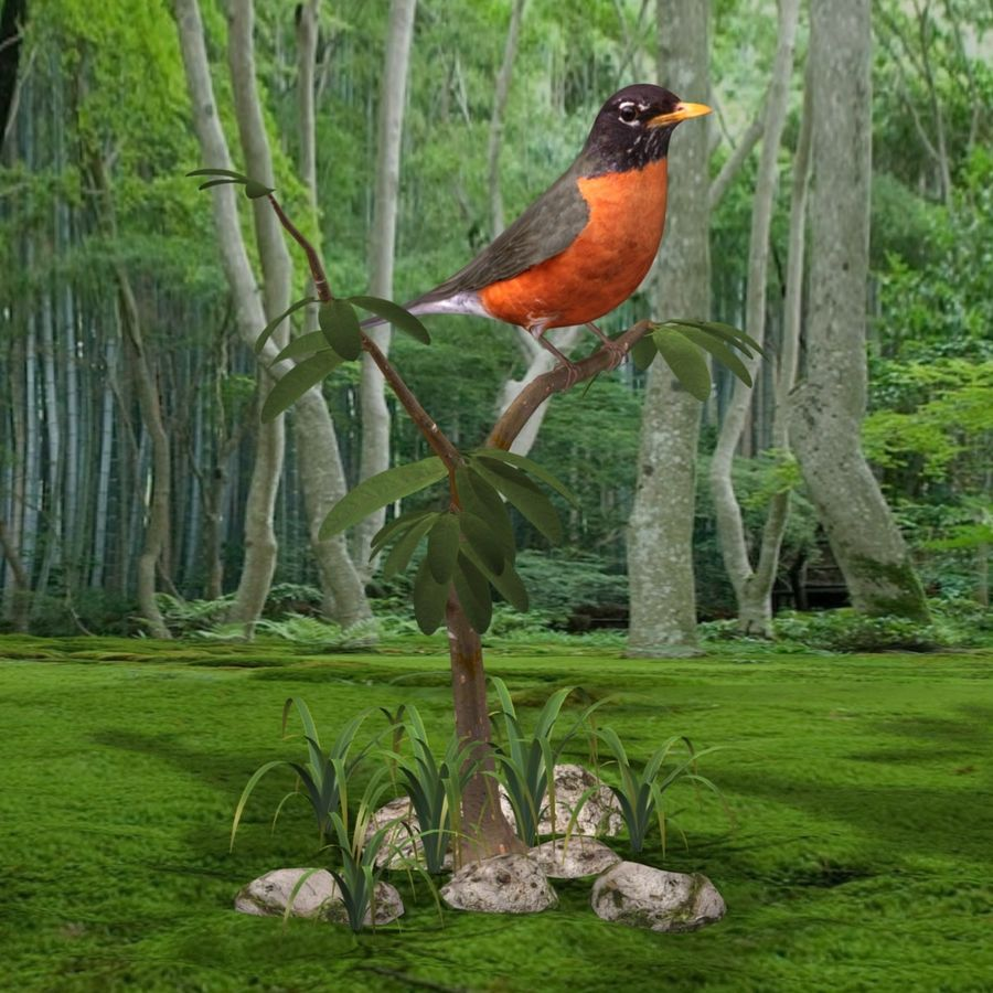 AB American Robin royalty-free 3d model - Preview no. 5