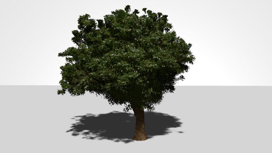 现实的总部树 royalty-free 3d model - Preview no. 1