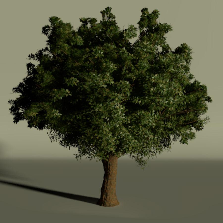 现实的总部树 royalty-free 3d model - Preview no. 4