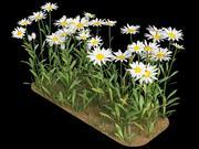 matricaria camomile chamomile 3d model
