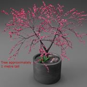 젊은 벚꽃 나무 3d model