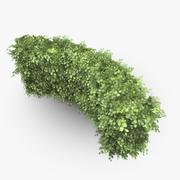 Common Beech Hedge Curve 3d model