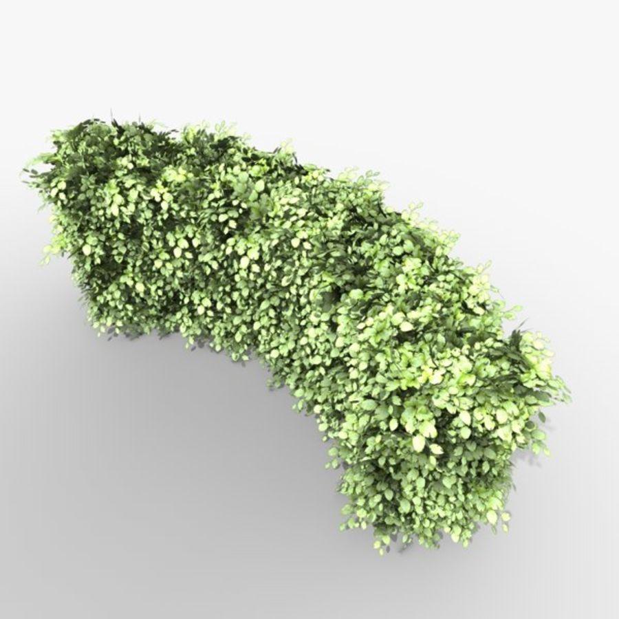 常见的山毛榉树篱曲线 royalty-free 3d model - Preview no. 2