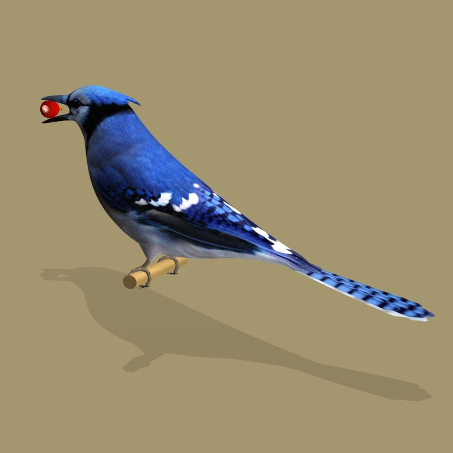 AB Blue Jay SA royalty-free 3d model - Preview no. 3