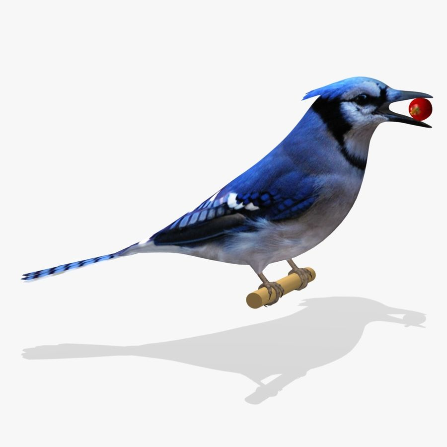 AB Blue Jay SA royalty-free 3d model - Preview no. 1