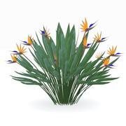 Strelitzia reginae 3d model