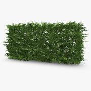 Common Laurel Hedge 3d model