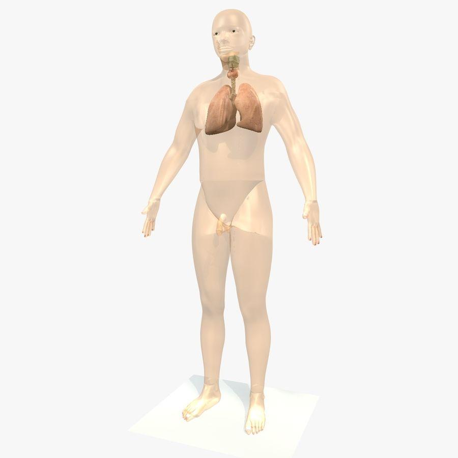 Męskie ciało i płuca royalty-free 3d model - Preview no. 2