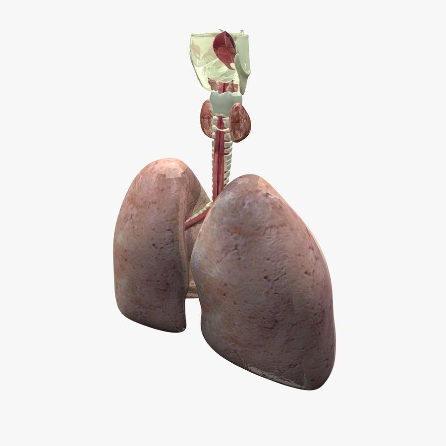 Męskie ciało i płuca royalty-free 3d model - Preview no. 15