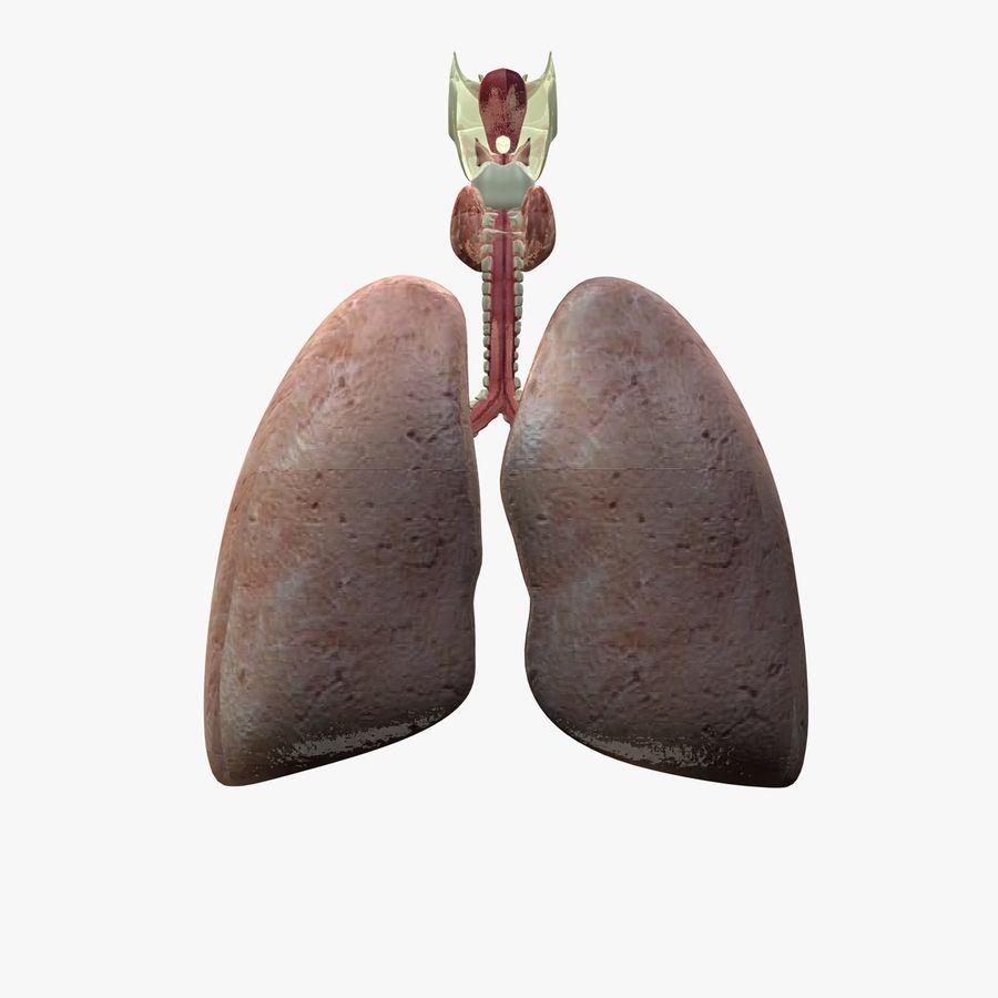 Męskie ciało i płuca royalty-free 3d model - Preview no. 16