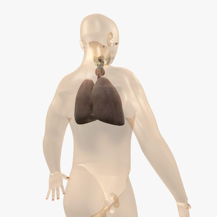 Męskie ciało i płuca royalty-free 3d model - Preview no. 4