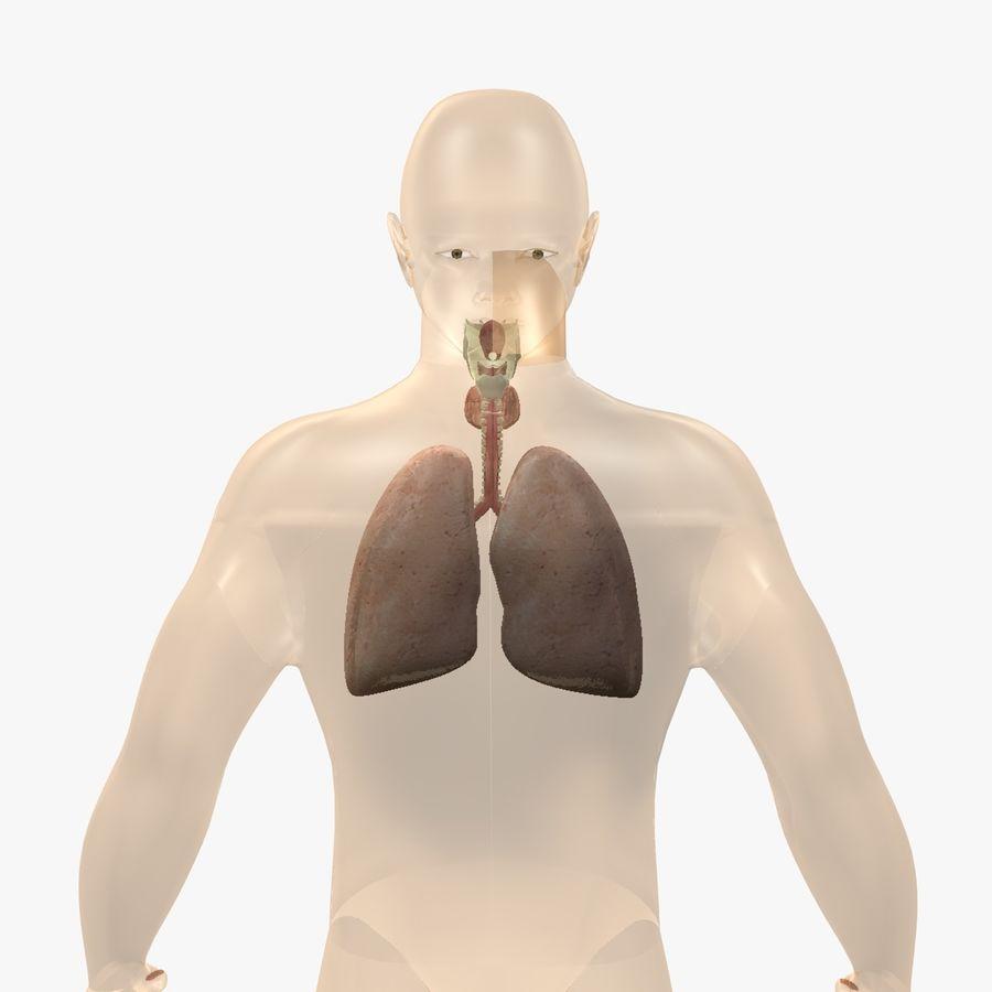 Męskie ciało i płuca royalty-free 3d model - Preview no. 6