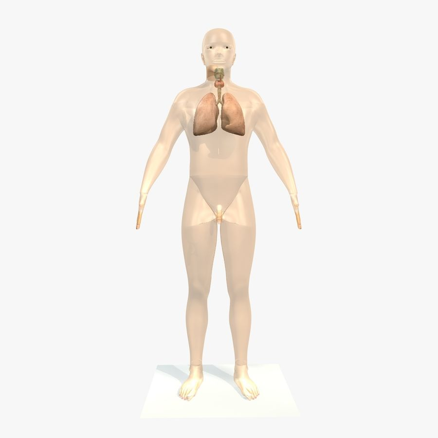 Męskie ciało i płuca royalty-free 3d model - Preview no. 1