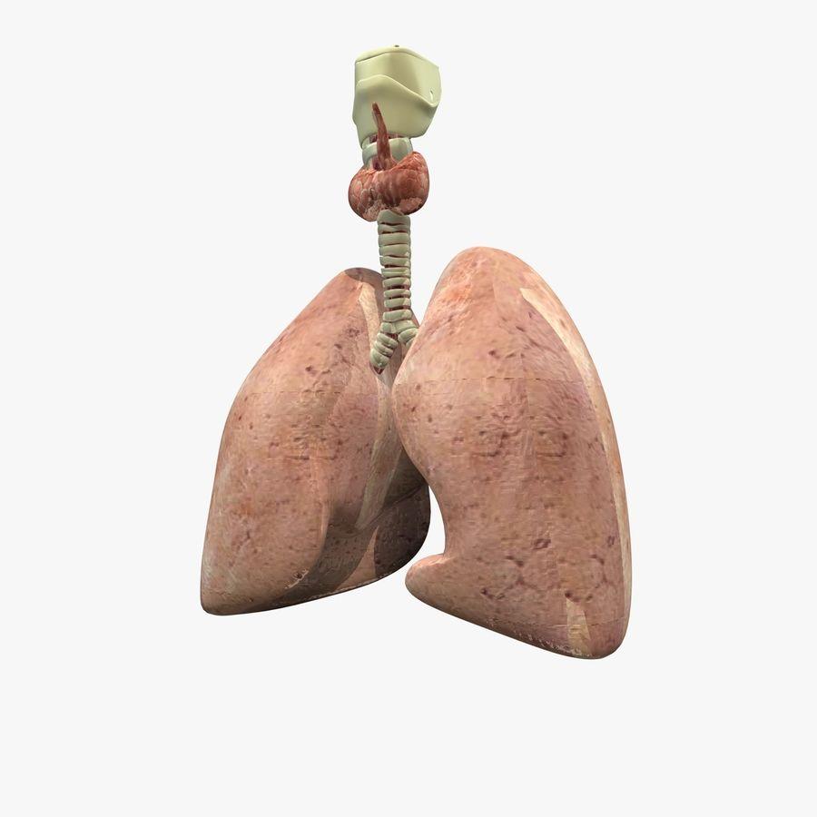 Męskie ciało i płuca royalty-free 3d model - Preview no. 12