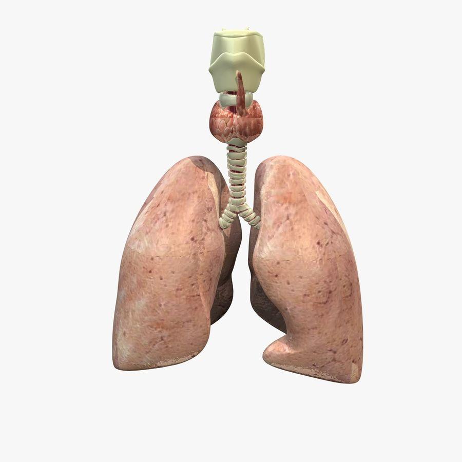 Męskie ciało i płuca royalty-free 3d model - Preview no. 11