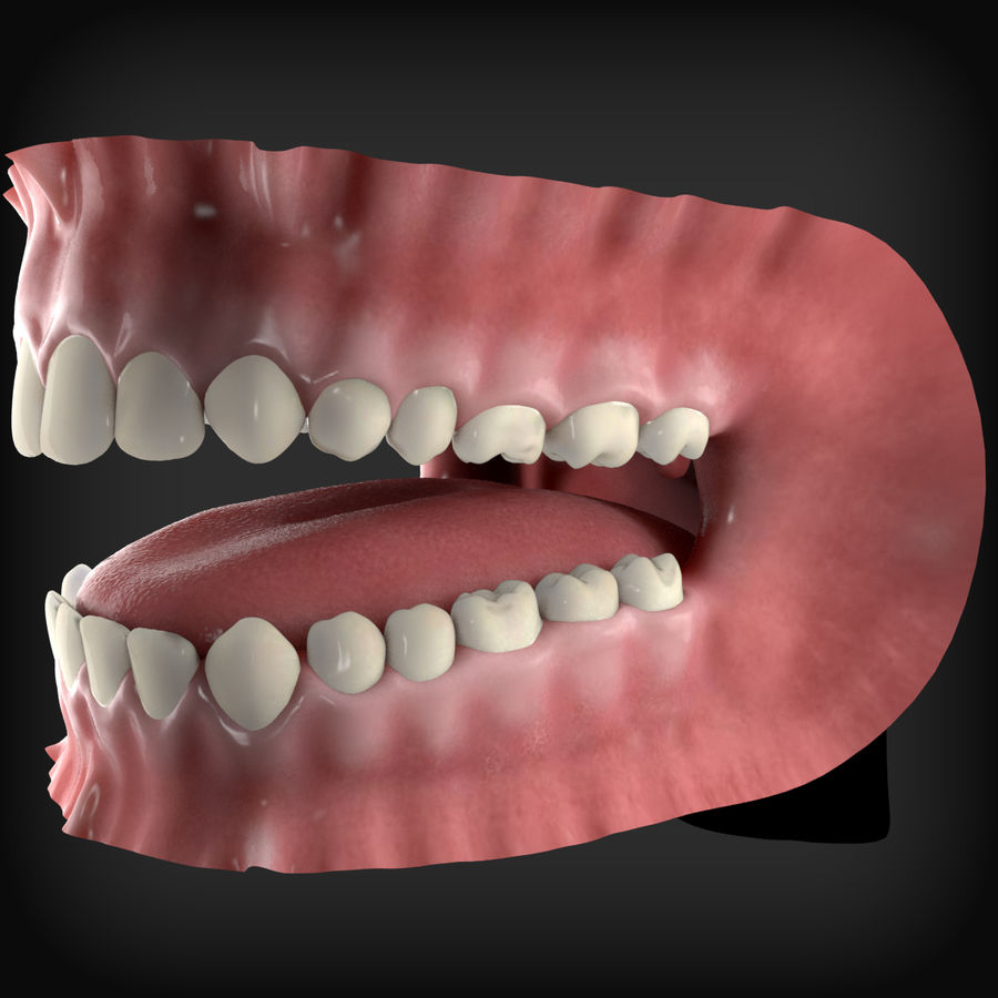 Human Mouth royalty-free 3d model - Preview no. 3