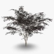 Holunder Schwarze Schönheit 3d model