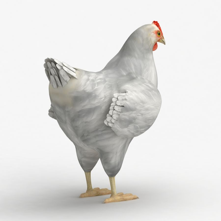 Chicken royalty-free 3d model - Preview no. 7