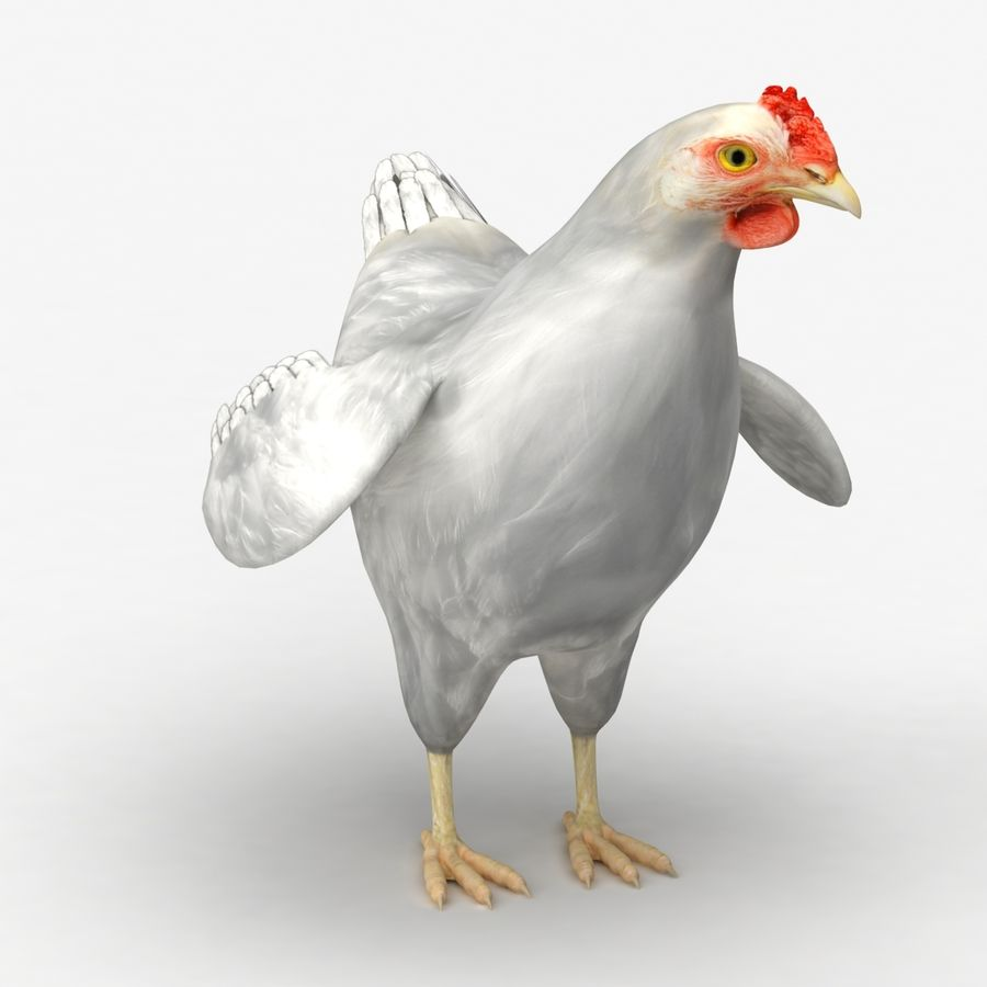 Chicken royalty-free 3d model - Preview no. 6
