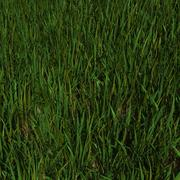 Grass Animated 3d model
