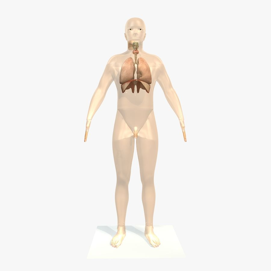 Corpo respiratorio e maschile royalty-free 3d model - Preview no. 1