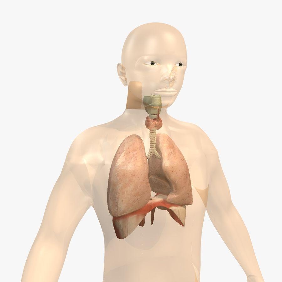 Corpo respiratorio e maschile royalty-free 3d model - Preview no. 8