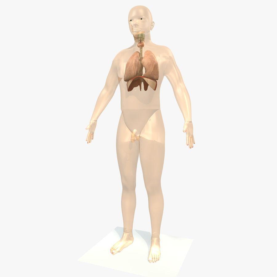 Corpo respiratorio e maschile royalty-free 3d model - Preview no. 2