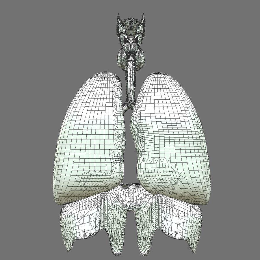 Corpo respiratorio e maschile royalty-free 3d model - Preview no. 23