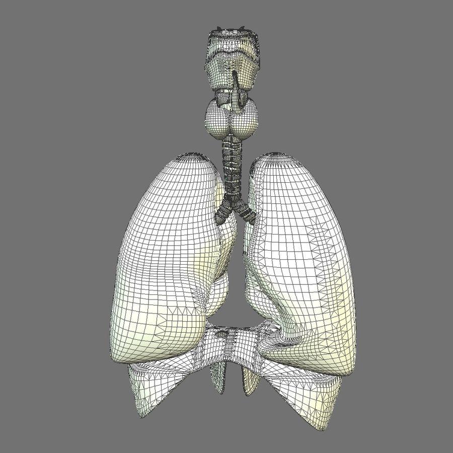 Corpo respiratorio e maschile royalty-free 3d model - Preview no. 21