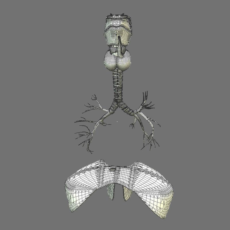 Corpo respiratorio e maschile royalty-free 3d model - Preview no. 24