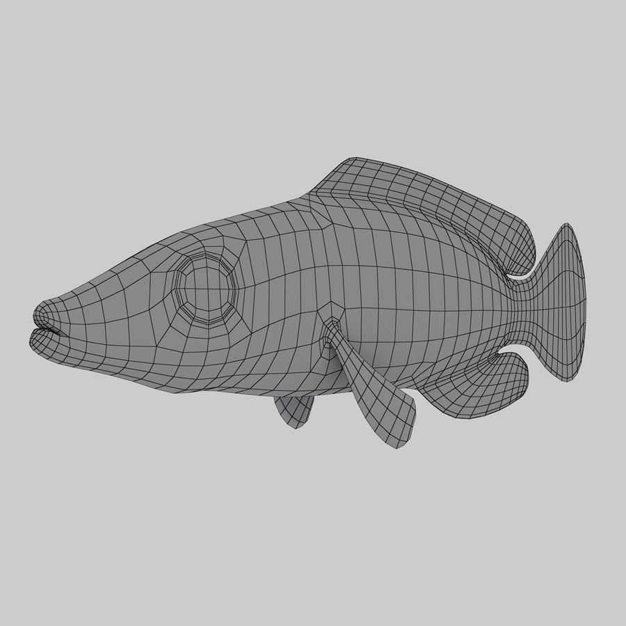 Mystery Wrasse royalty-free 3d model - Preview no. 9