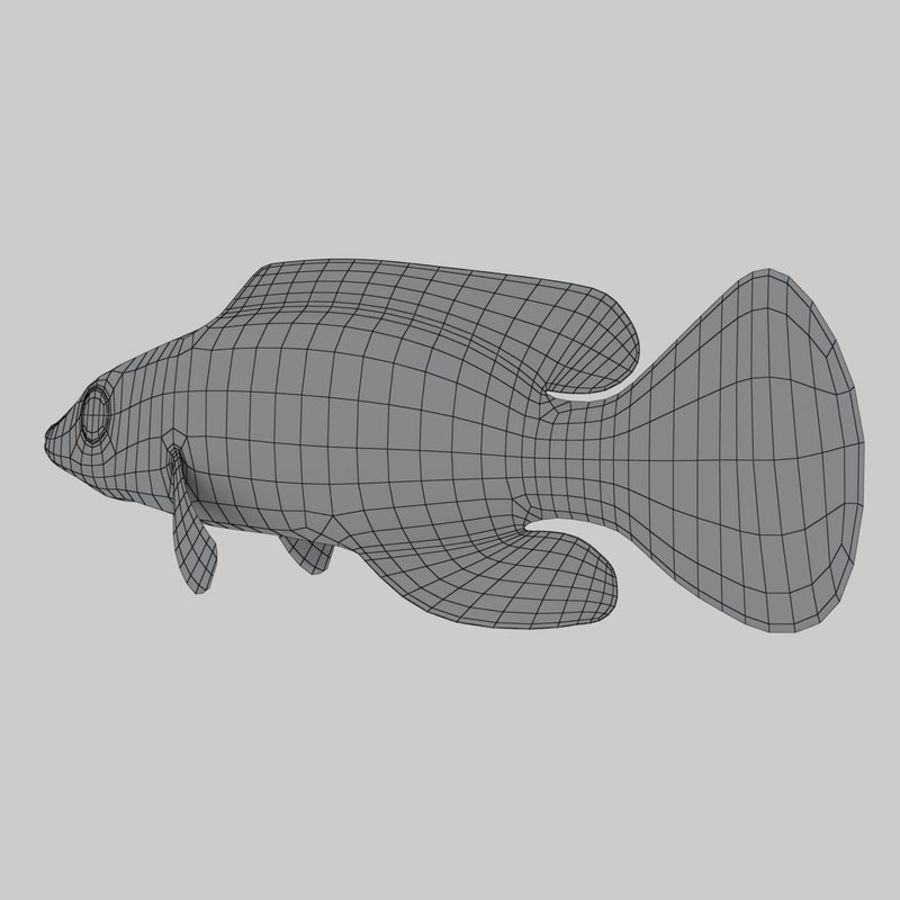 Mystery Wrasse royalty-free 3d model - Preview no. 8