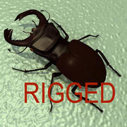 Stag-Beetle 3d model