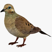 Mourning Dove 3d model