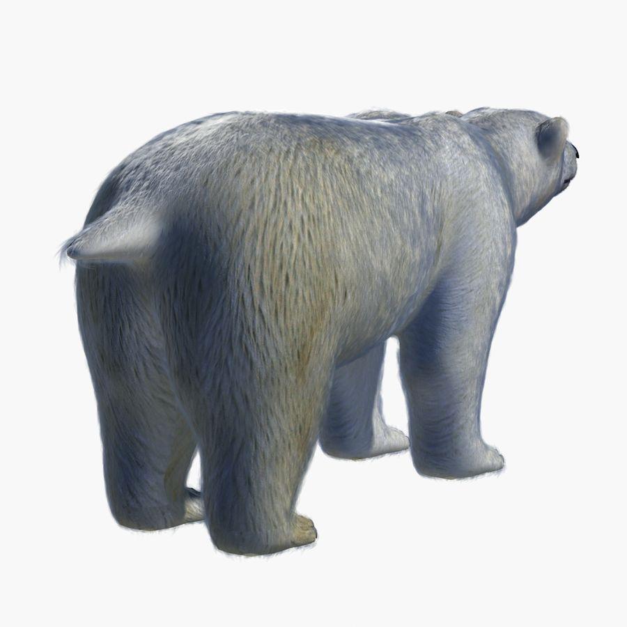 Urso polar royalty-free 3d model - Preview no. 8