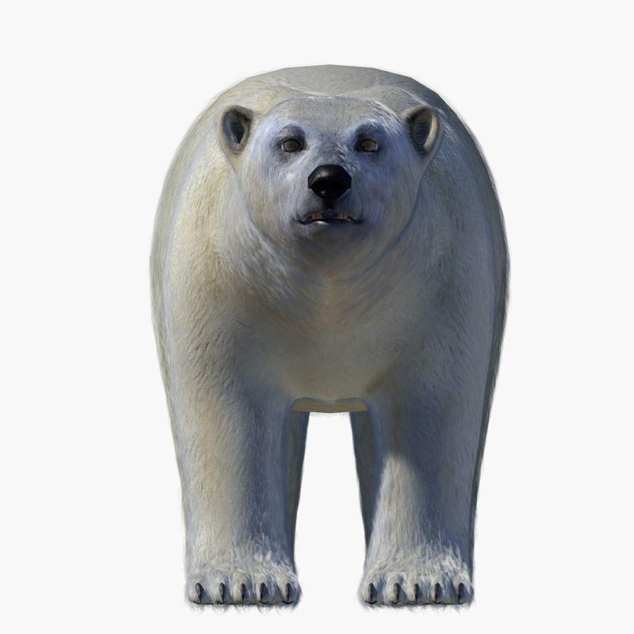 Urso polar royalty-free 3d model - Preview no. 4