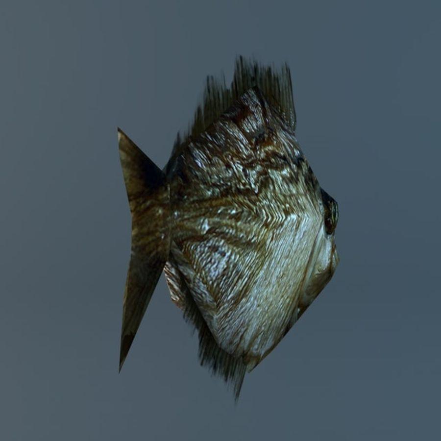 Low poly piranha royalty-free 3d model - Preview no. 5