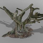 Fig Tree A Australian 3D SCAN 3d model